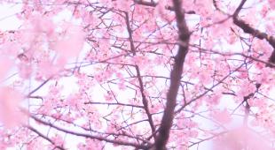 教務Suzukiの「稲門の母」ブログ